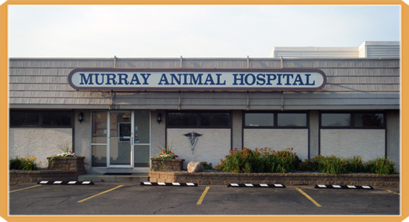 veterinarian in blaine mn
